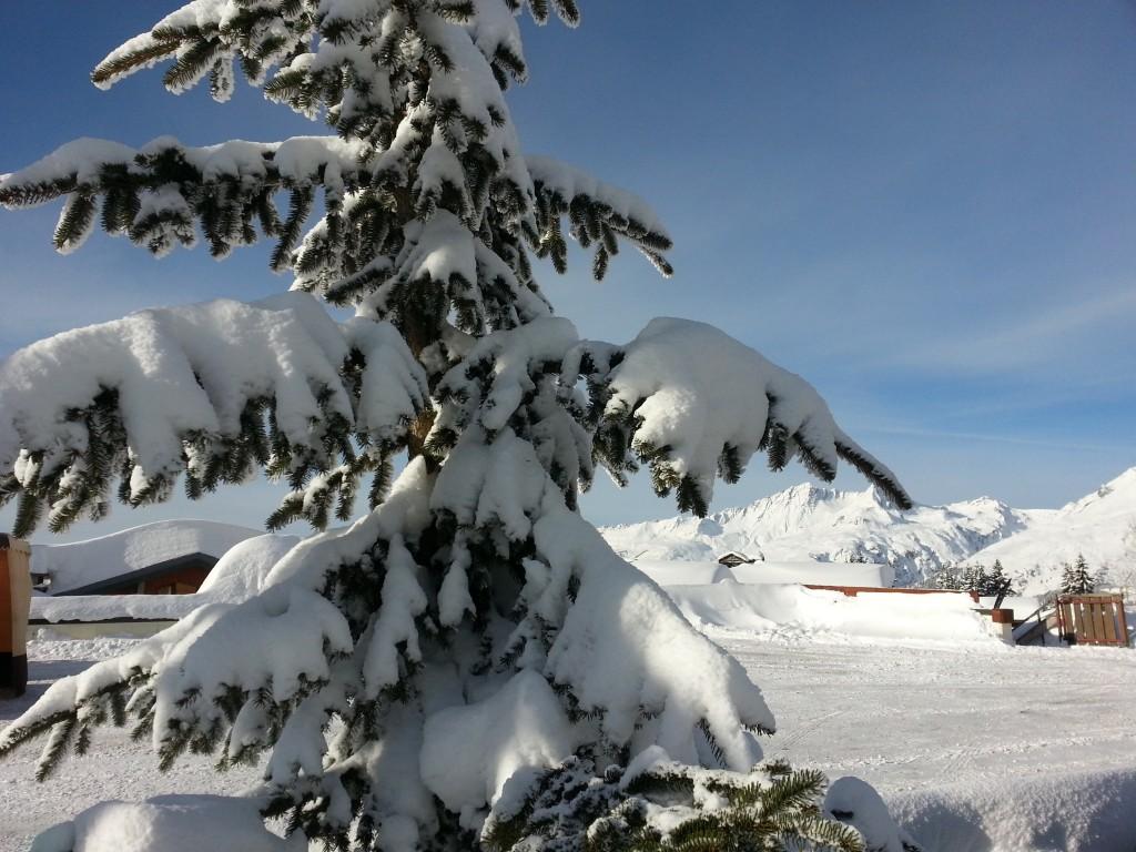 sapin et neige