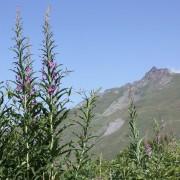 La flore en altitude