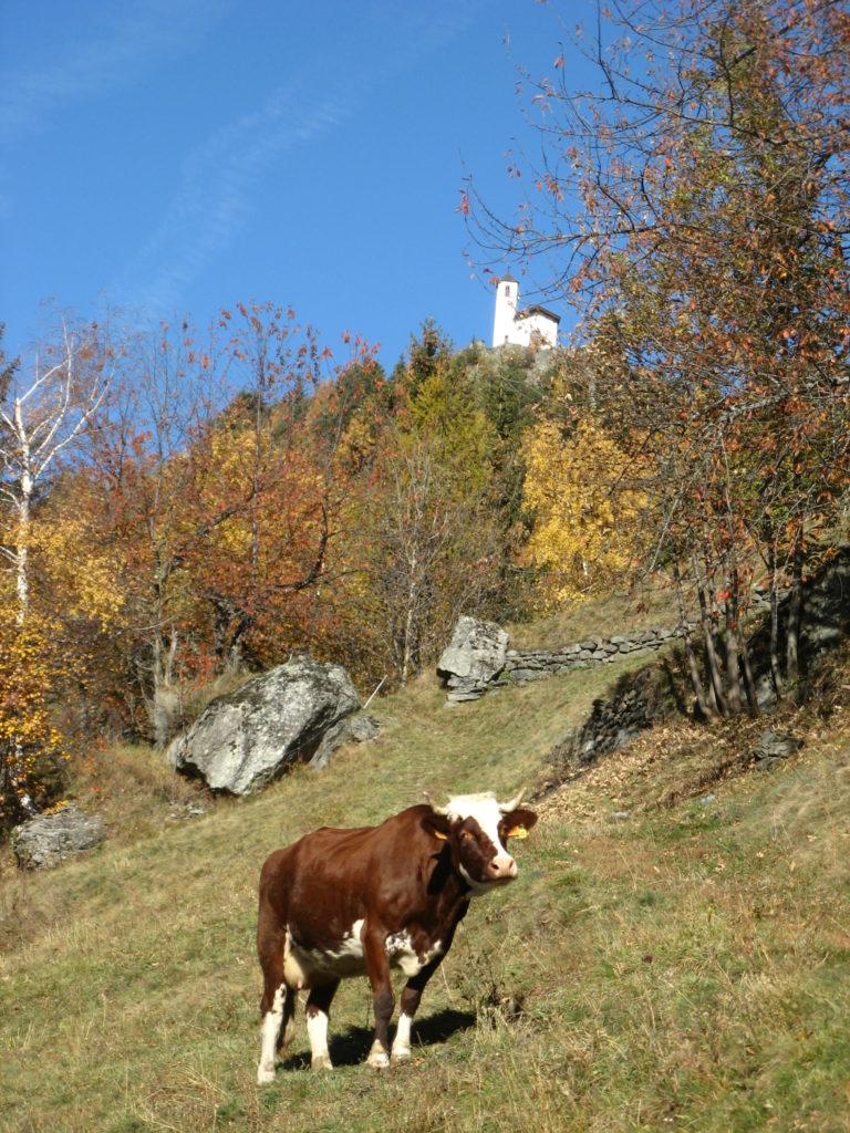 Le Mousselard - Chapelle Saint Michel - Vache abondance