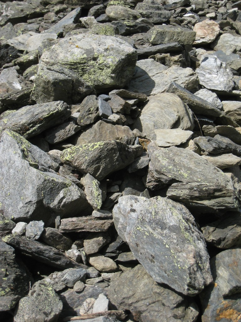 Mousses et lichens fossilisent les cailloux du murger