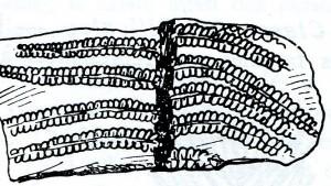 Vestige de fougère fossile pouvant être trouvé au col du Petit Saint Bernard