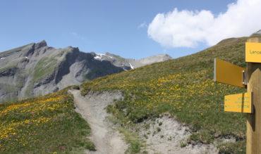 (Français) 20 randonnées pour cet été…